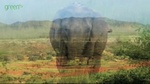 IFAW_elephant01.jpg