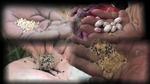seedsavers02.jpg