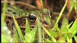 biodiver1208-02.jpg