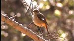 biodiver1208-03.jpg