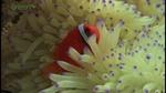 biodiver_15min003.jpg