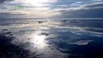 greenpeace_drop_into_the_ocean202.jpg