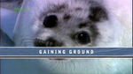 ifaw_gaining_ground01.jpg