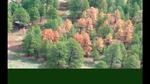 nwf_western_wildfires02.jpg