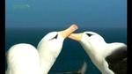 0328_albatross1.jpg