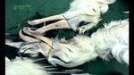 0328_albatross2.jpg