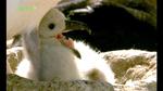 0328_albatross3.jpg