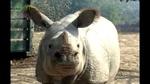 0404_rhino1.jpg