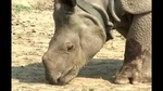 0404_rhino3.jpg