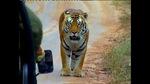 0509_tiger3.jpg