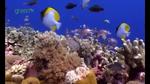 wwf_live_reef_fish04.jpg