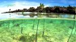wwf_mangroves001.jpg