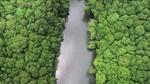 wwf_mangroves003.jpg