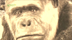 onsight_alfred_the_gorilla03.jpg