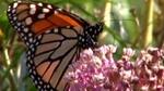 nwf_certified_wildlife_habitats01.jpg