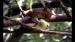 habitats_food002.jpg