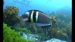 seafood_see_life03.jpg