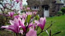 Explore the Gardens of Stoneywell