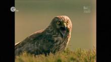 Hen Harrier - An appeal for help