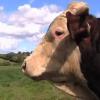 英国の小規模酪農のススメ